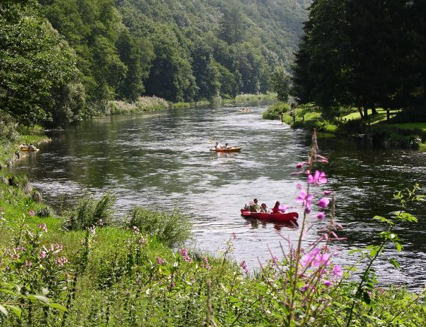 2007 - été - kayaks - vue Semois - fleurs (JM Verday - CTCV) (6)